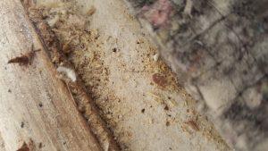 20160822 192109 300x169 - $70,000 Bed Bug Settlement Against JK2 Westminster, LLC
