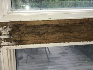 IMG 3877 300x225 - $100,000 Termite Inspection Claim Damage Settlement