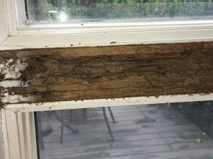 IMG 3877 300x225 - $100,000 Termite Inspection Claim Damage Settlement