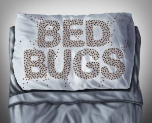 hotel bed bug pillow cover 300x243 - Philadelphia Bed Bug Lawyer