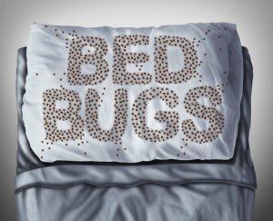 philadelphia hotel pillow cover bed bugs