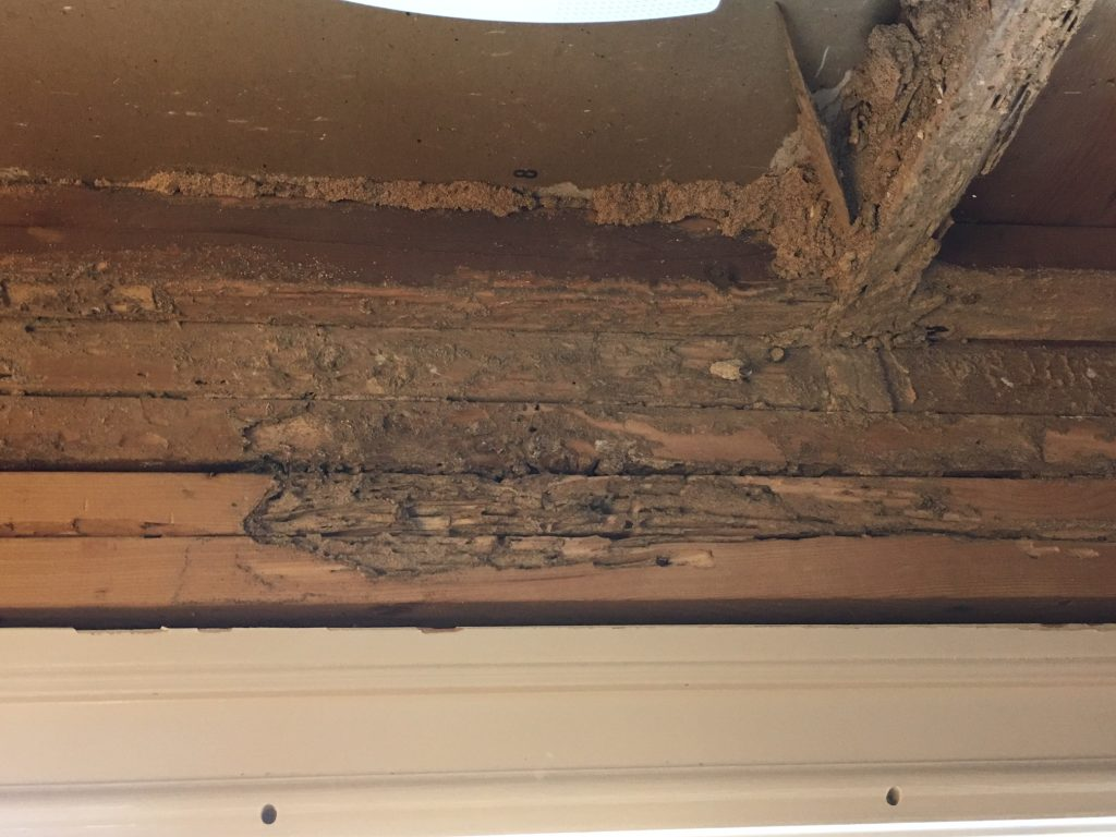 IMG 5819 1024x768 - What Costs Are Associated with Termite Damage and Infestation?