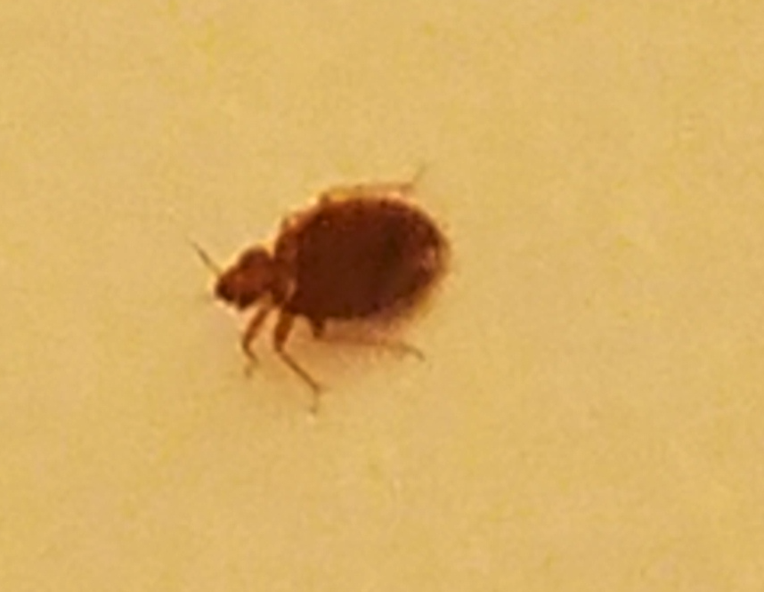 $70,000 Bed Bug Settlement Against JK2 Westminster, LLC