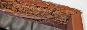 banner termitedamage 1 300x104 - The Termite Inspector Missed Termite Damage