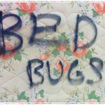 bed bug bite claim