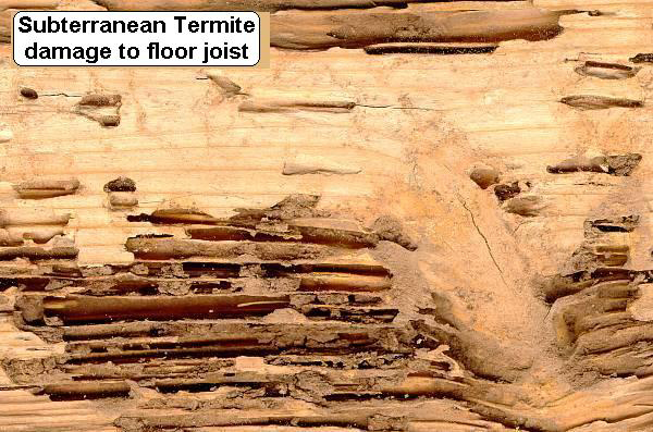 img termitefloorjoist - Termite Home Damage Repair Lawyers