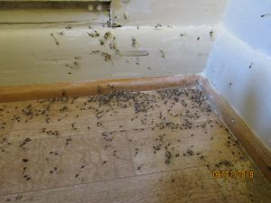 termite swarmers in bathroom 300x225 - PestNow Pays $110,000 WDI/Termite Inspection Settlement to Avoid Trial